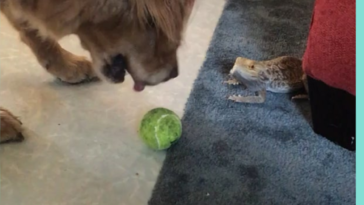 Dog wants reptile to throw him the ball