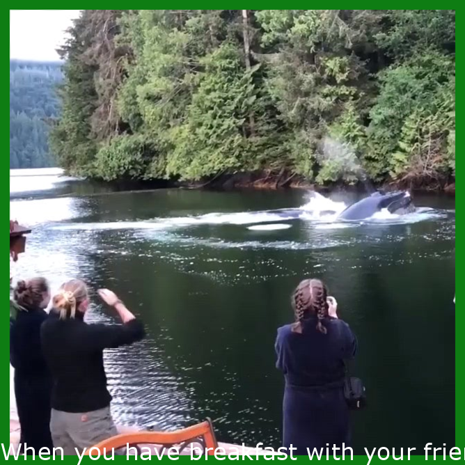 When you have breakfast with your friends and humpback whales want to join you