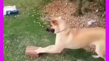 All he needs for happiness is a brick
