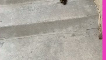 Nice guy helps duckling reunite with its mom, duckling gets too excited
