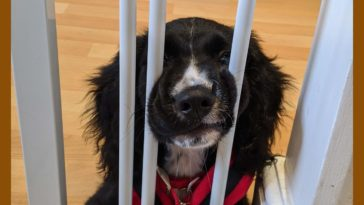 In jail for derping without a license