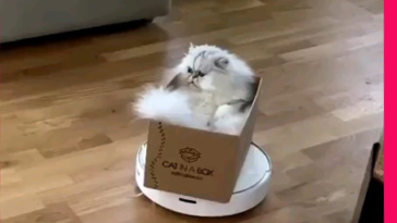 Make roomba for the Persian King of Kings