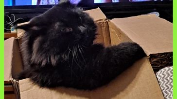 Reddit meet my cat Stone, he likes boxes and tv.